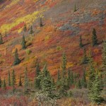 Fall splendor, Yukon