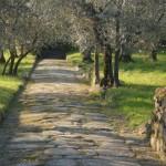 along an Etruscan road, near Fiesole, Italy
