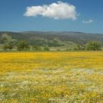 Calif spring