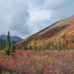 Yukon fall