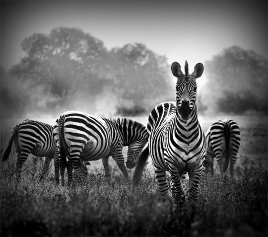 50+ Beautiful Black and White Photography 16