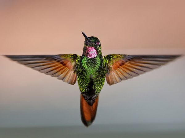 75 Beautiful Birds Photography for Inspiration 67