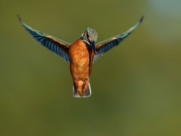 75 Beautiful Birds Photography for Inspiration 9