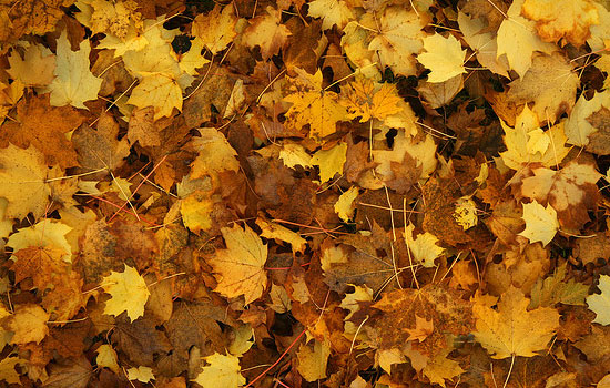 25 Most Useful Free High Resolution Leaf Textures 13
