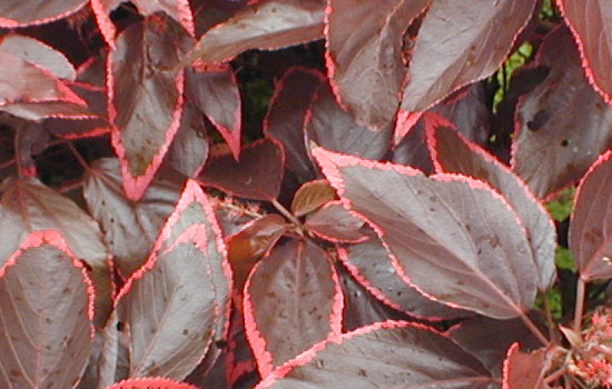 25 Most Useful Free High Resolution Leaf Textures 3