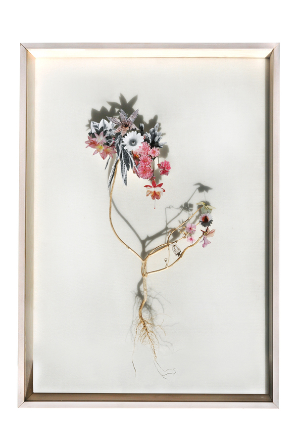 Beautiful Flower Illustrations for designers Inspiration 11