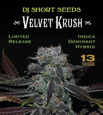 Home | DJ Short Seeds