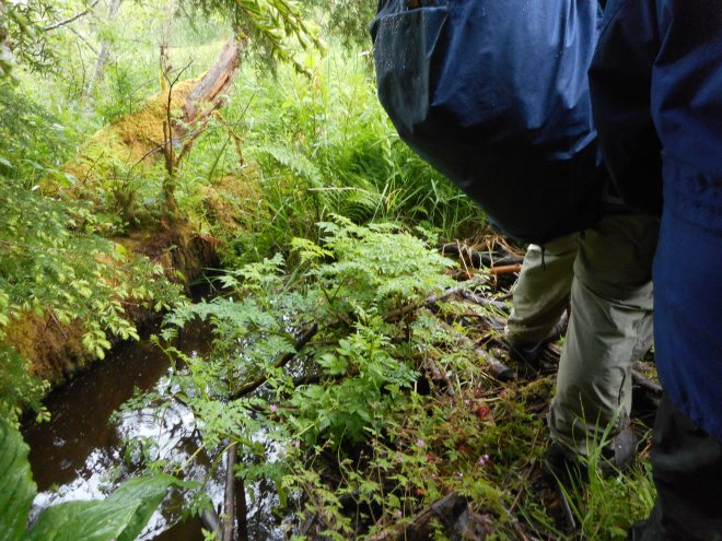 Standing on a beaver dam