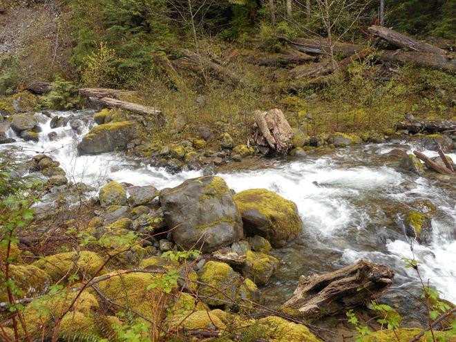 Hall Creek Running High