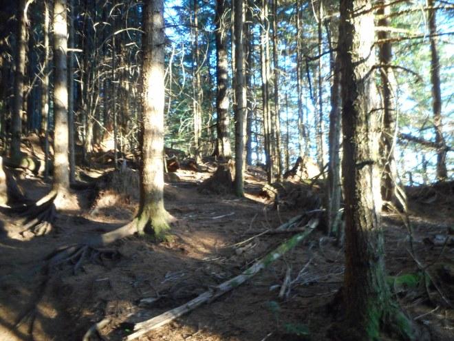 Sun Dappled Woods