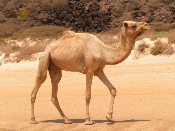 Quite Arabian pee self photo