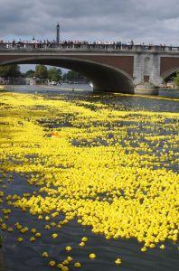 rubber-duck-duckie-race-water-yellow