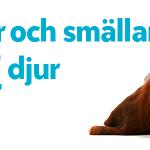 Hjälp ditt djur på Nyårsafton!