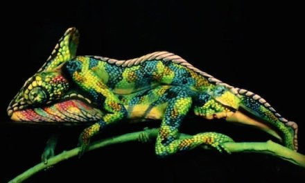 JOHANNES STOTTER'S INSANE BODY PAINTING