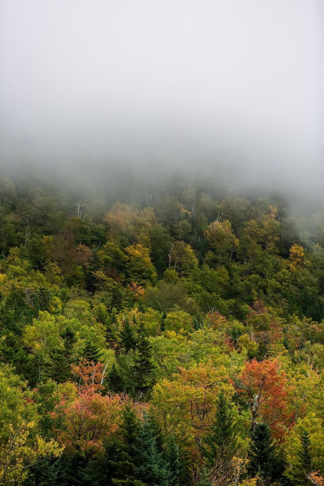 new england one week fall foliage tour