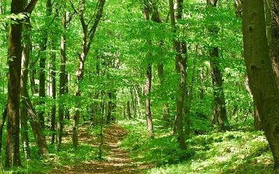 غابات بلغراد