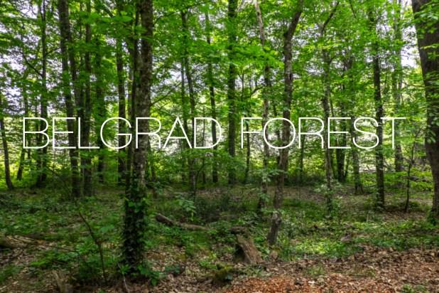 Belgrad Forest Istanbul