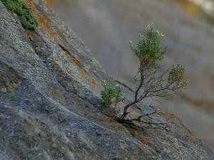 tenacity in disciple making movements