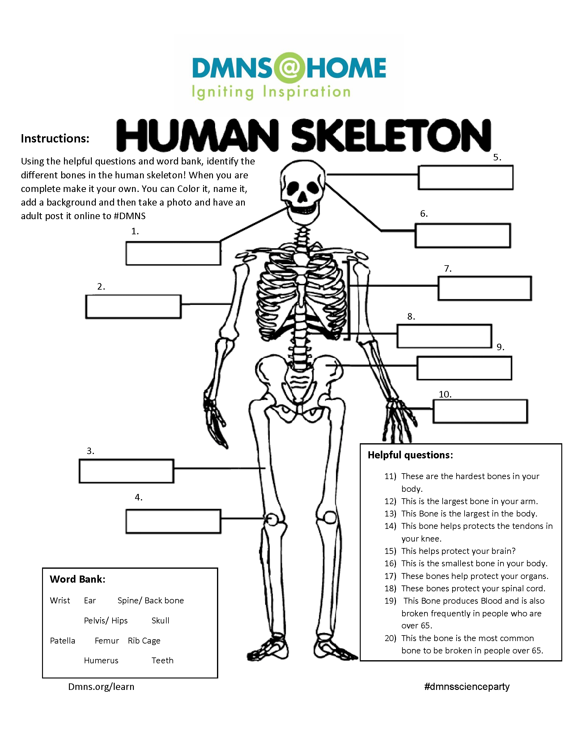 Human Skeleton Worksheet Denver Museum Of Nature Amp Science