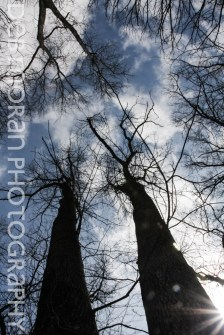 Tall trees reaching for each other