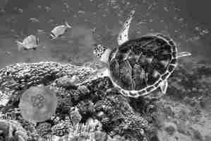 Fotografía tomada en el fondo del mar donde se ve cierta diversidad de vida submarina.