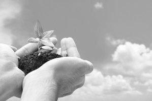 Manos que sostienen un puñado de tierra con una planta mirando al cielo, hacia el universo.