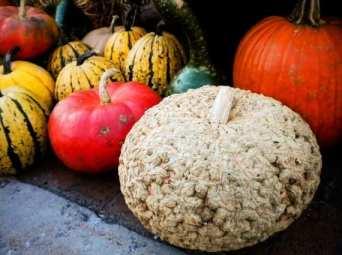 Farmers market fall produce