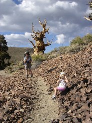 In the Ancient Britstlecone Pine Forest in 2004 (with Marie in my carrier!)