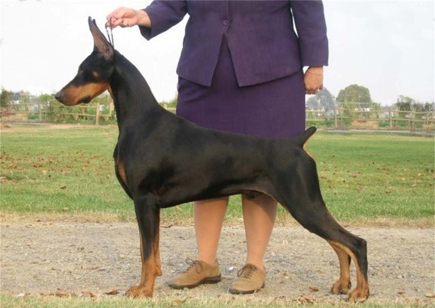Breed Of Dogs With Long Necks