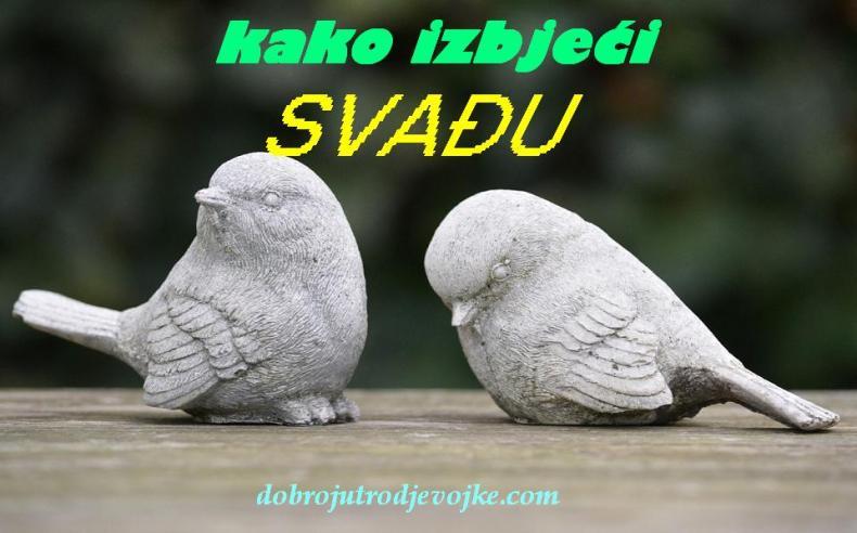 slika za blog-24-7-ptice