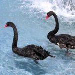 Alzheimer's Disease and Obesity – The Black Swan
