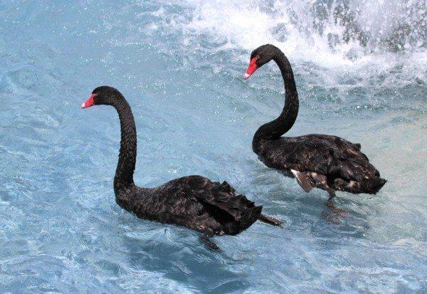 Alzheimer's Disease and Obesity - The Black Swan