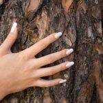 Pycnogenol (French Maritime Pine Bark Extract)