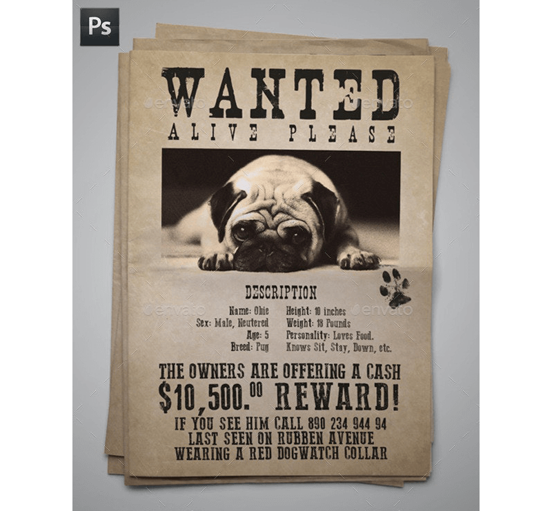 lost cat dog flyer poster templates