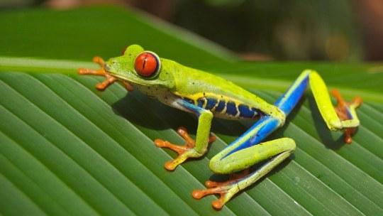 Les meilleures explorations de la nature pour vos vacances au Costa Rica