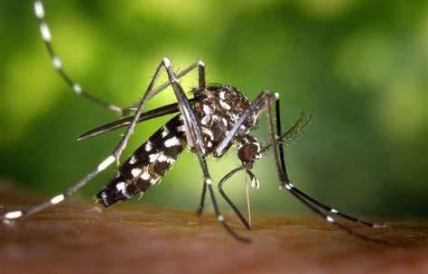 Comment lutter contre les moustiques en voyage ?