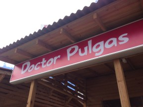 Doctor Pulgas