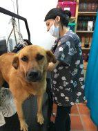 Baño y peluquería canina cerca a Rionegro.