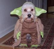 Yoda perro