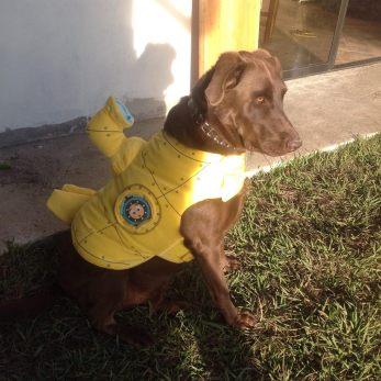 Perro disfrazado de Yellow Submarine