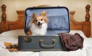 Viaja con tu perro o tu gato