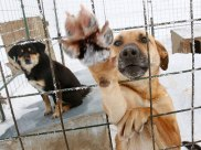 Perros y donaciones