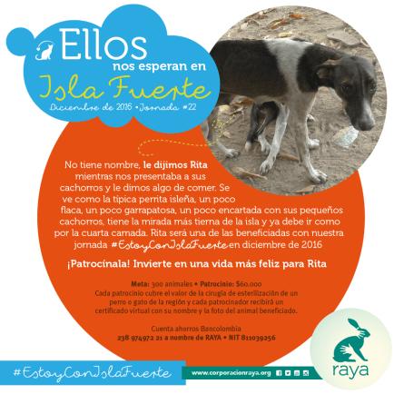 Jornada de esterilización animal en Isla fuerte