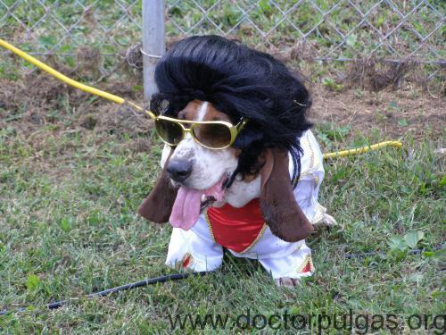 Elvis perro