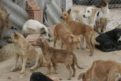Perros en busca de hogar