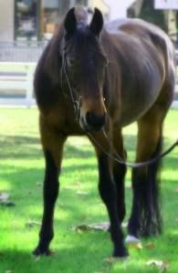 Horse.Beautiful LoveBug 2[1]