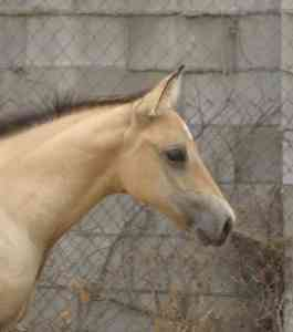 Horse.Daisy headshot