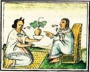 Herbs and Plants – History