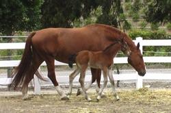 ramey-horse