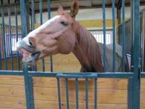 Horse.Chance
